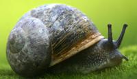 Last van slakken? Neem contact op met Accuraat Plaagdierenbestrijding.